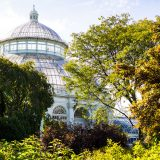 Conservatory Dome behind green fall trees