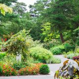 Perennial Garden in Fall