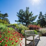 Red flowers in the Perennial Garden in fall with wooden bench