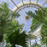 A photo of the Palm Dome in the Enid A. Haupt Conservatory