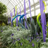 A CHIHULY installation set among grasses and flowers in the Enid A. Haupt Conservatory.
