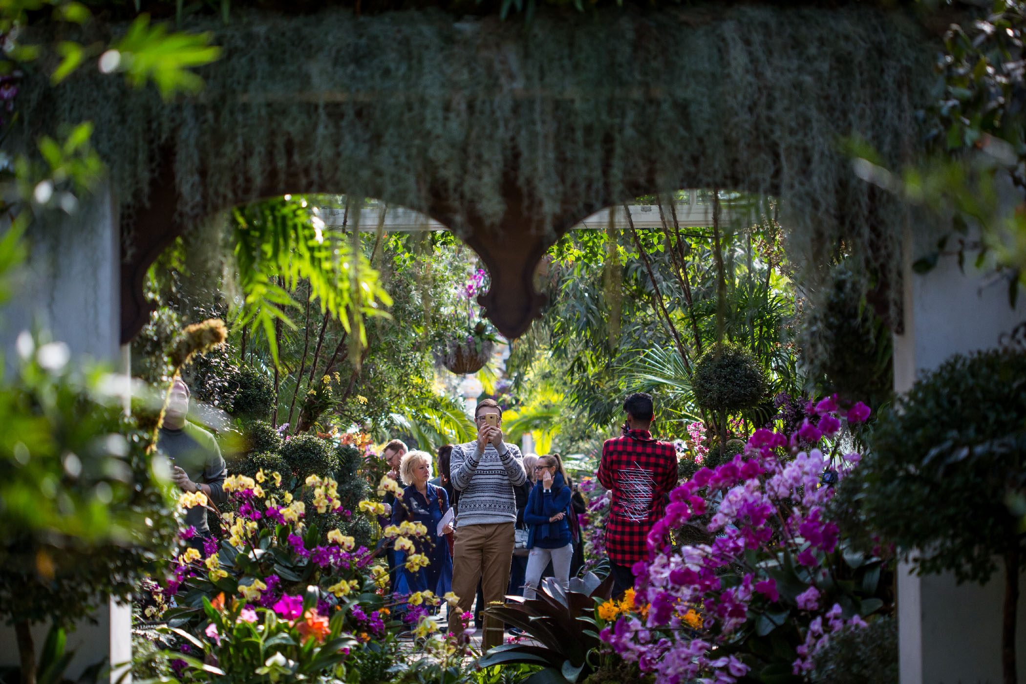 Superbe Visitors Enjoy The Orchid Show