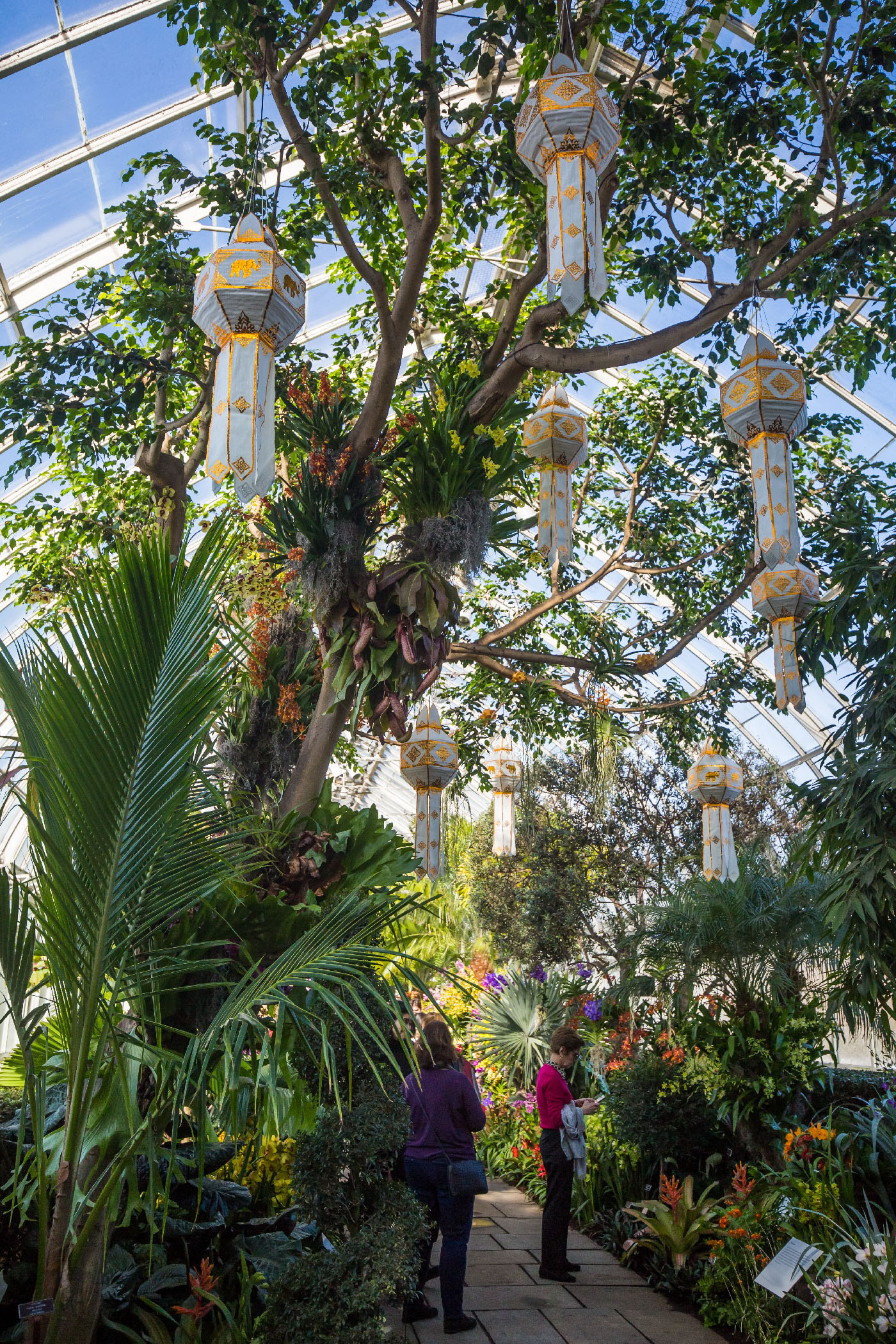 NYBG_The_Orchid_Show_2017_09 Palm Tree Garden Design on pink garden design, palm thai restaurant los angeles, simple house garden design, sand garden design, dragon garden design, earth garden design, fruit garden design, palm trees tampa bay, lotus garden design, dragonfly garden design, hibiscus garden design, maple tree garden design, tiger garden design, rose garden design, autumn garden design, idea yard garden design, pumpkin garden design, arizona garden design, christmas tree garden design, southern living garden design,