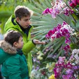 Two young boys examining pink and white orchids.