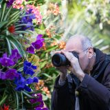 A man photographing orchids.