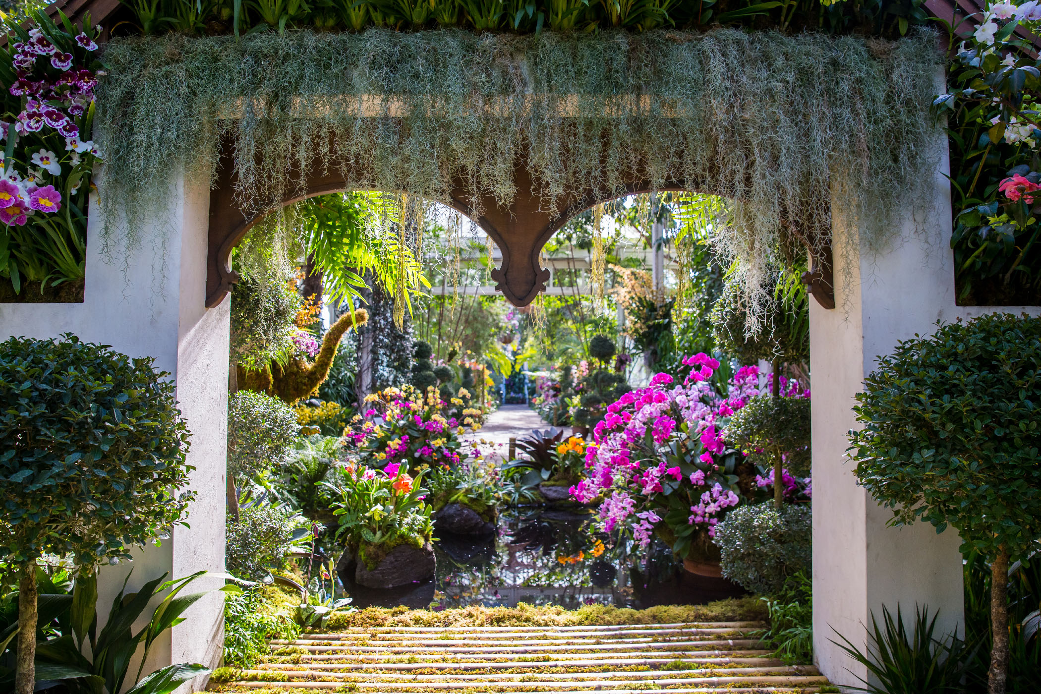The orchid show thailand press room new york botanical - Chicago flower and garden show 2017 ...