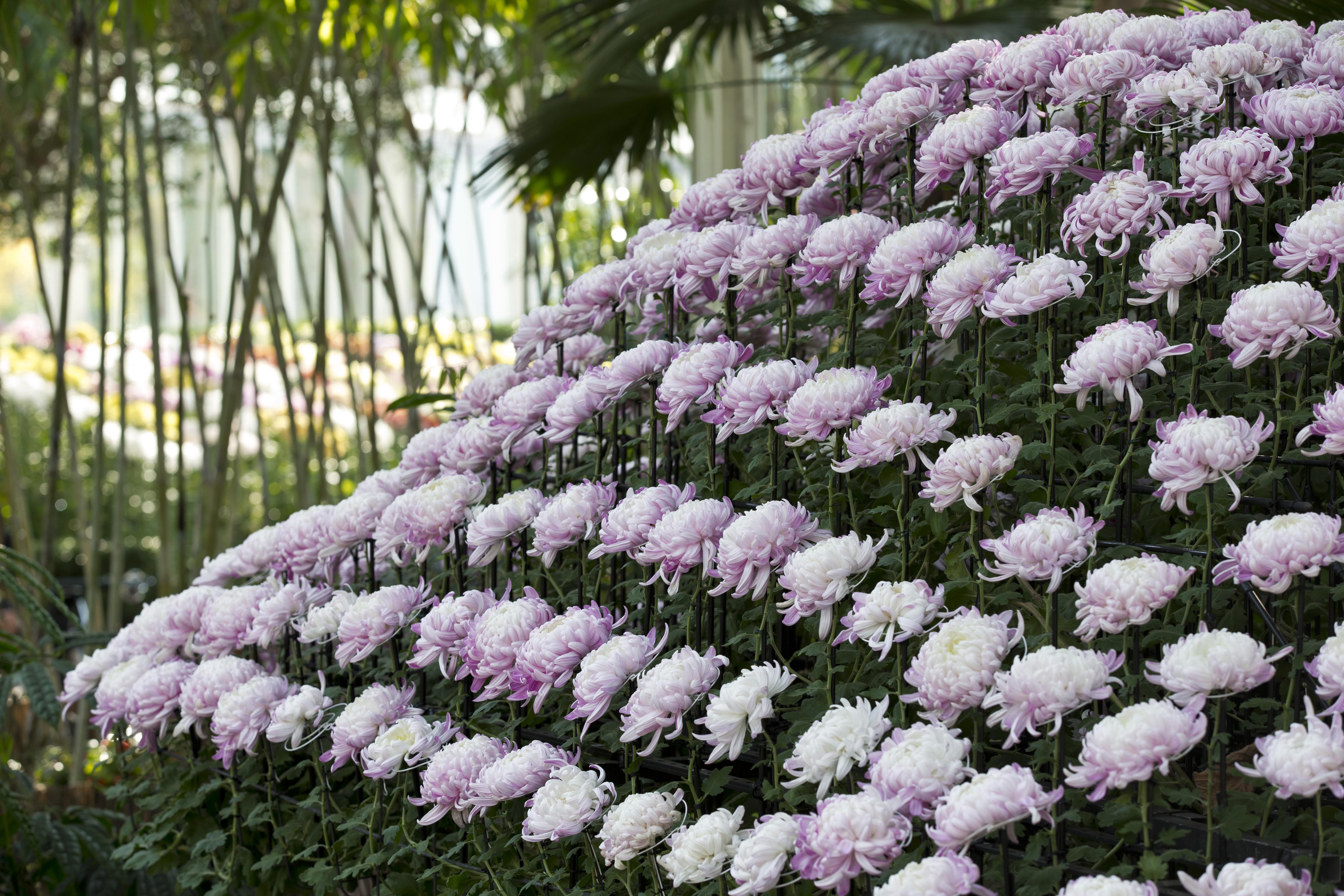 Image Result For Flower Garden In Japanese