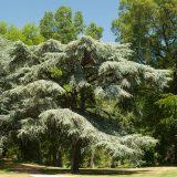 A horizontal shot of a tree at NYBG.