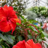 Photo: Hawai'i in the Haupt Conservatory Tour