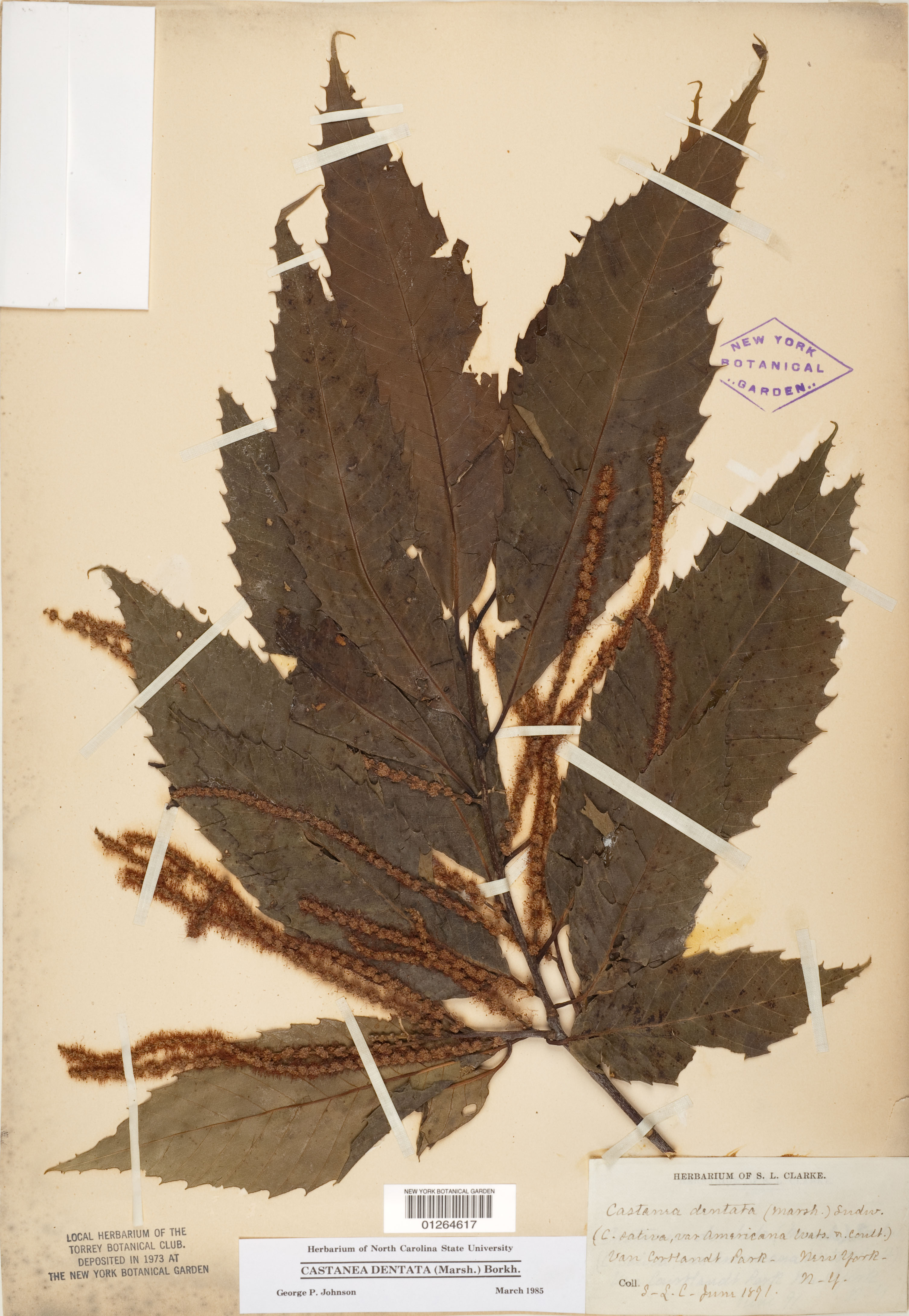 What in the World is a Herbarium? Press Room » New York Botanical Garden