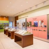 A wide shot of the What in the World is a Herbarium? exhibition, including specimens in glass cases and several panels featuring information about NYBG's science department.