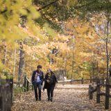 Fall Forest Weekends