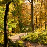 Azalea Garden in the fall.