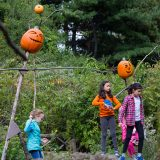 Scarecrows & Pumpkins