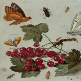 Drawing of a plant with berries and butterflies