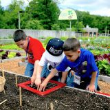 Three young boys digging in dirt at the Edible Academy's garden.