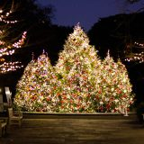 The evergreen trees in the Leon Levy Visitor Center lit for Christmas.