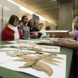 People looking at plants in the Herbarium