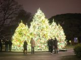 Evergreen trees lit at night in the Reflecting Pool.