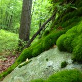 Photo of moss in a forest