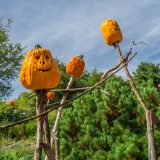 Photo of scarecrow pumpkins