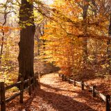 A forest path in the fall.