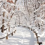 A walkway covered in snow in the Thain Family Forest