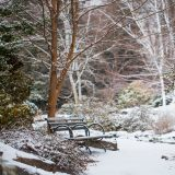 A snowy scene at the Garden during winter.