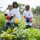 Children watering plants at the Edible Academy