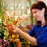 A staff member caring for an orchid.