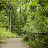 Photo of a forest walkway lined with trees