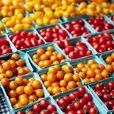 Photo of orange and red tomatoes