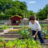 Photo of a kid watering plants at the Edible Academy