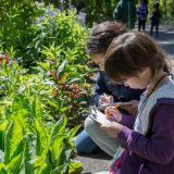 Children studying plants.