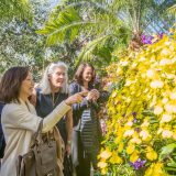 Three women looking at orchids.