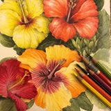 Tropical Hibiscus drawn in watercolor and colored pencil.