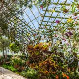Image of climbing flowers on trellises in the Conservatory