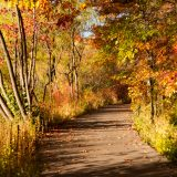 The Wetland Trail in fall, with the foliage turned various shades of amber, gold, and brown.