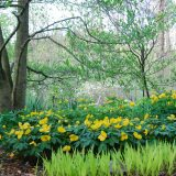 Image of yellow flowers in a garden for Margaret Roach Winter Lecture Series