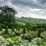 Image of rose garden from Jinny Blom for WInter Lecture Series