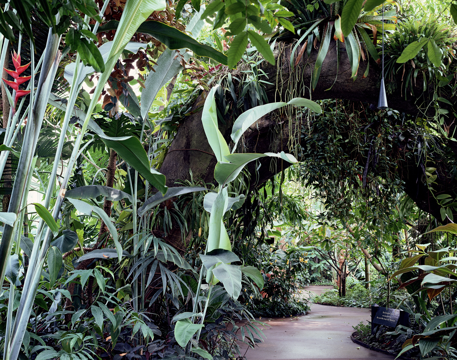 Lowland Tropical Rain Forest Gallery in Conservatory