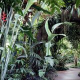 A walkway surrounded by trees and plants in the Lowland Rain Forest Gallery