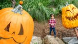 Kid standing looking at carved pumpkins