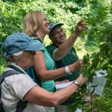 Photo of citizen scientists examining plants in the forest