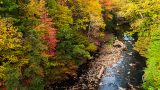 Photo of the Bronx River in fall