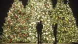 A family standing in front of three lit up Christmas trees
