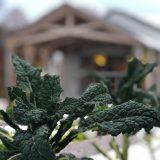 A leaft plant near the Edible Academy.