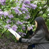 Photo of an artist with lilacs