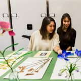 Two women looking at herbarium specimens.