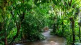 Photo inside the Enid A. Haupt Conservatory.